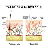 Human skin changes or ageing skin