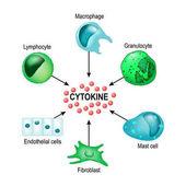Cytokine Vector concept