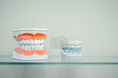 Plastic human teeth models and