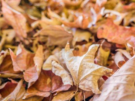 Photo pour Photo d'arrière-plan d'un pieu commissionnée des feuilles dans un segment de mémoire dans les zones rurales Wisconsin comme la rentrée approche - image libre de droit