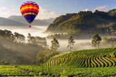 Colorful hot air balloons flying over misty morning sunrise in strawberry garden, View of Morning Mist at doi angkhang Mountain, Chiang Mai, Thailand