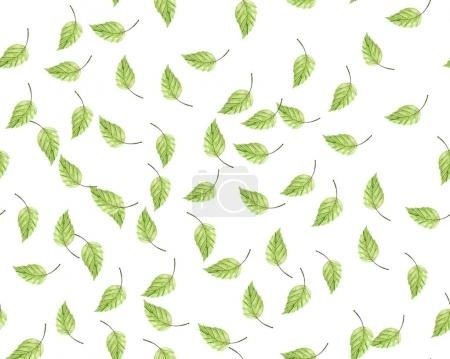Photo pour Feuilles vertes sur fond blanc - image libre de droit