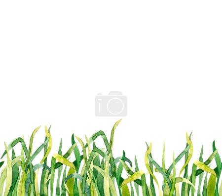 Green watercolor grass