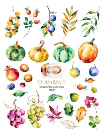 Colorful autumn harvest collection