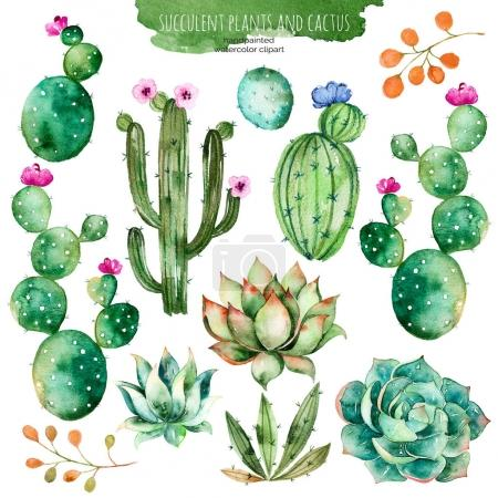Photo for Watercolor handpainted cactus plant and succulent plant.Watercolor clipart, isolated on white background.Perfect for your project,cover,wallpaper,pattern,gift paper,wedding - Royalty Free Image