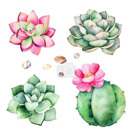 Photo for Watercolor collection with succulents plants,pebble stones,cactus.Handpainted iclipart isolated on white background.World of succulent and cactus collction.Perfect for your unique design,logo,patterns - Royalty Free Image