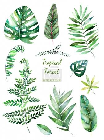 Tropical Leafy collection.