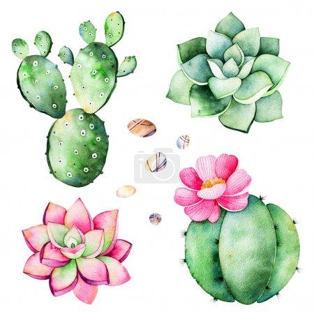 Photo pour Collection Aquarelle avec des plantes succulentes, galets pierres, cactus. Peint à la main iclipart isolé sur fond blanc. Monde de collction succulentes et les cactus. Parfait pour vos patrons de conception unique, logo - image libre de droit
