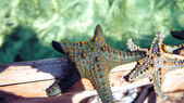 Starfish in the lagoon on the southern beach on the ocean. Marin
