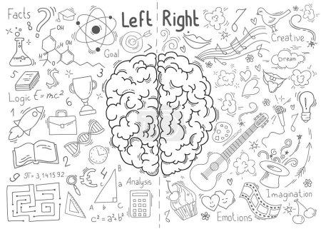 Illustration pour Concept du cerveau humain. Concept de fonctions cérébrales gauche et droite - image libre de droit