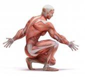 Anatomická muž izolované na bílém