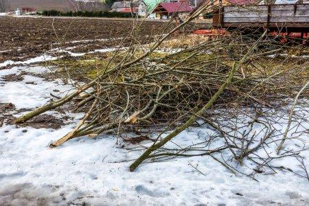 Photo pour Bois mort sur la route. Arbre abattu et branches. Thème de l'agriculture et de la campagne. - image libre de droit