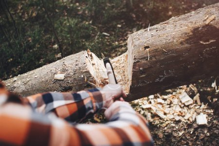 Strong woodcutter is going to cut a tree in the wood with a sharp ax