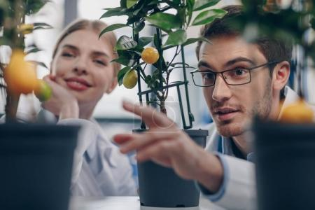 biologists with lemon plants