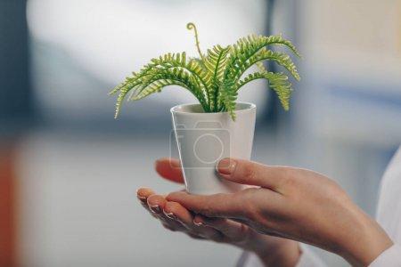 fern plant in flowerpot