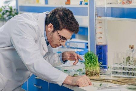 Photo pour Mâle biologiste travaillant avec de l'herbe en laboratoire chimique - image libre de droit
