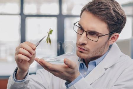 biologist looking at plant in tweezers