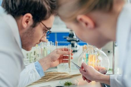 biologists with wheat ear in lab