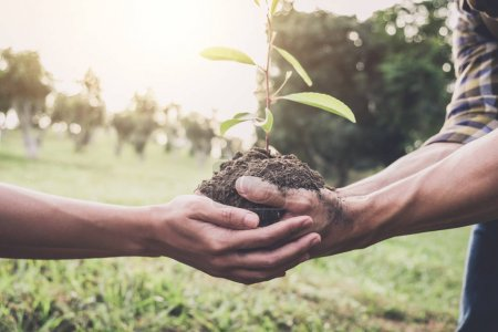 Photo for Young couple carrying a seedlings to be planted into the soil in the garden as save world concept, nature, environment and ecology. - Royalty Free Image