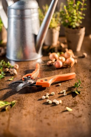 garden pruner on wooden table