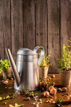 watering can and herbs