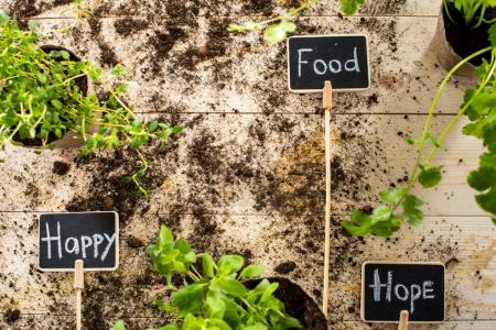 Photo for Top view of fresh green plants with with soil and happy, food and hope signs on wooden planks, garden scene - Royalty Free Image