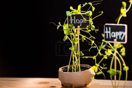 Photo for Close-up view of fresh green plants with happy and hope signs isolated on black, garden scene - Royalty Free Image