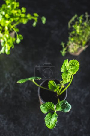 Photo for Close-up view of fresh green leaves on black, garden background - Royalty Free Image