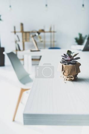 Succulent pot on desk