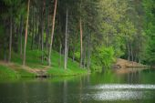 Coniferous Pine Forest and lake mirror reflection wild woods landscape moody weather