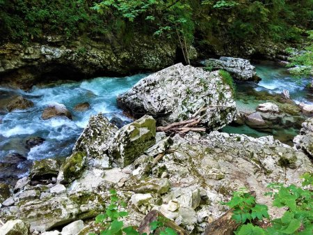 Colourful part of Radovla river in the Vintgar Gorge near Bled