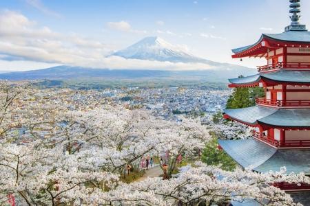 Churieto Pagda and Fuji Mountain with Spring Sakura at Fujiyoshida , Japan