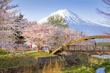 Fuji Mountain and Sakura Trees at Kawaguchiko Lake, Japan