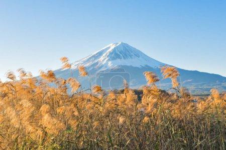 Fuji Mountain in Clear Sky Day at Oishi Park, Kawaguchiko Lake, Japan