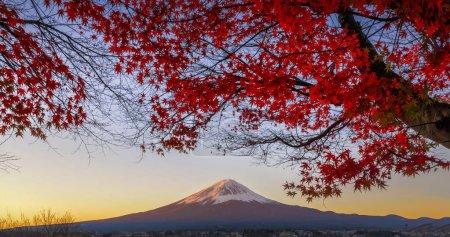 Fuji mountain and Red Maple Tree at Kawaguchiko Lake, Japan