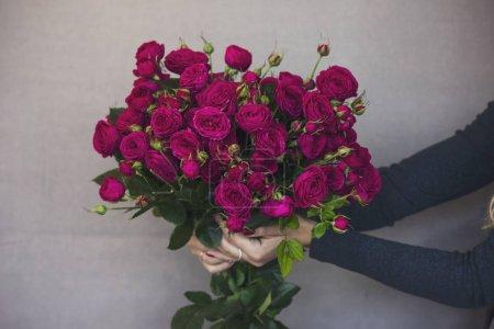 großer Strauß wunderschöner dunkelrosa Rosen in Frauenhand auf grau