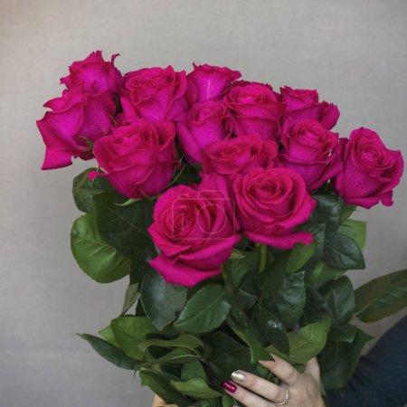 großer Strauß wunderschöner dunkelrosa Rosen in Frauenhand auf grauem Hintergrund