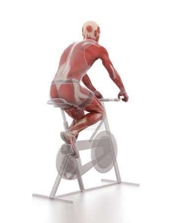man exercising on gym bicycle