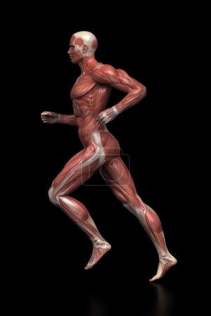 Running man muscles anatomy