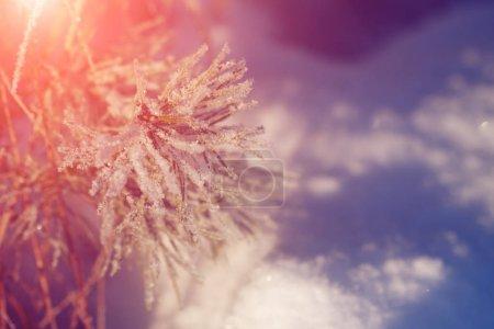 Photo pour Pays des merveilles d'hiver scène arrière-plan, paysage. Arbres, forêt dans la neige. Noël, Nouvel An temps - image libre de droit