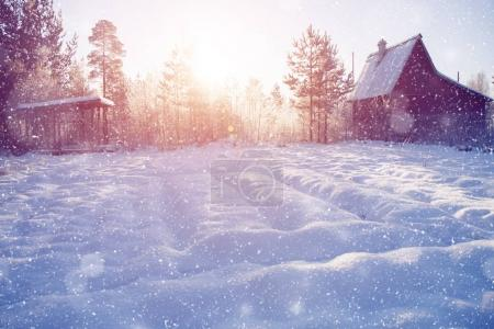 Winter wonderland scene background, landscape. Trees, forest in