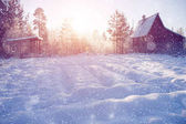 Winter wonderland scene background, landscape. Trees, forest in