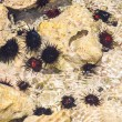 Sea urchins on the ocean floor. Close-up...