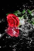 """Постер, картина, фотообои """"Красная роза с каплями воды"""""""