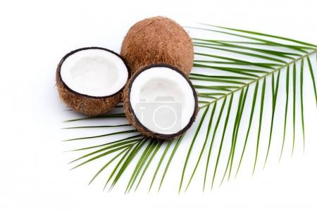 Photo for Organic ripe coconuts with green palm leaf  on coconut leaf isolated on white - Royalty Free Image