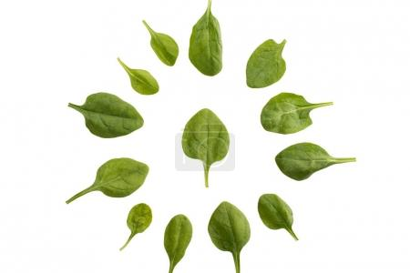 circle of spinach leaves