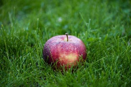 Photo for Close-up view of fresh ripe red apple in green grass - Royalty Free Image