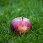 Fresh ripe apple in grass