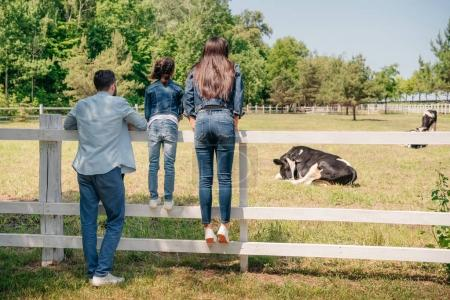 family looking at cows on pasture