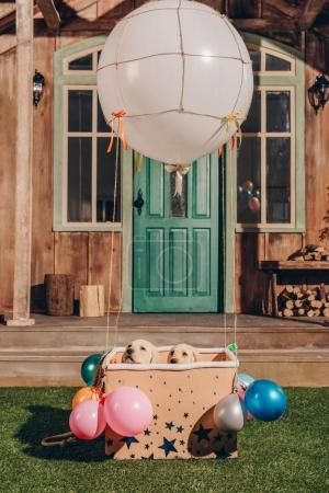 Foto de Adorables cachorros labrador sentados en caja de globo de aire cerca de casa - Imagen libre de derechos